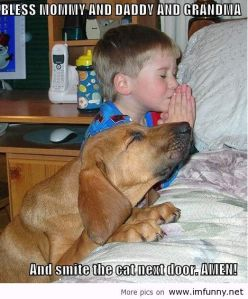 praying dog